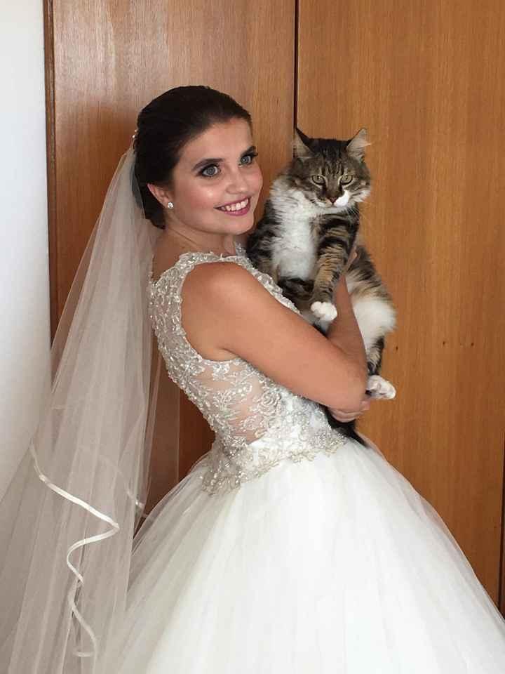 a Miau casou - 8