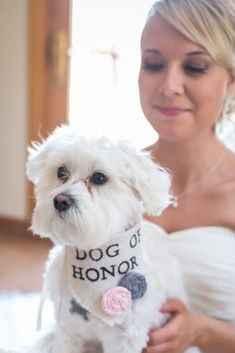 1. O Cão de Honra