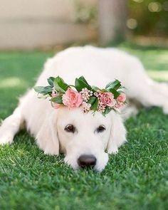 5. A Outra princesa do casamento
