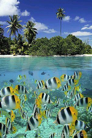Polinésia francesa - tahiti e bora bora - 17