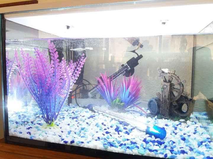Habemus Aquarium - 1