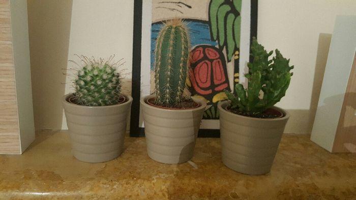 Plantação de cactos e suculentas - 'diy' - 1