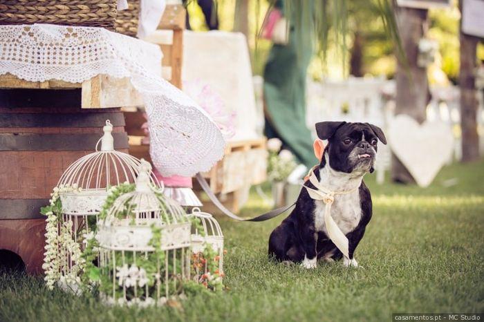 Dama de honor canina: Like ou Dislike? 1